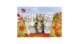 Ravensburger Puzzel Katjes op Ontdekkingsreis 2x12 Stukjes